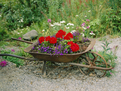 view-of-an-old-wheelbarrow-used-for-summer-flowers.jpg